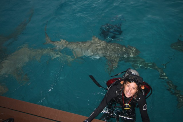 Diving with sharks in the Bahamas. Photo: Tim Taylor